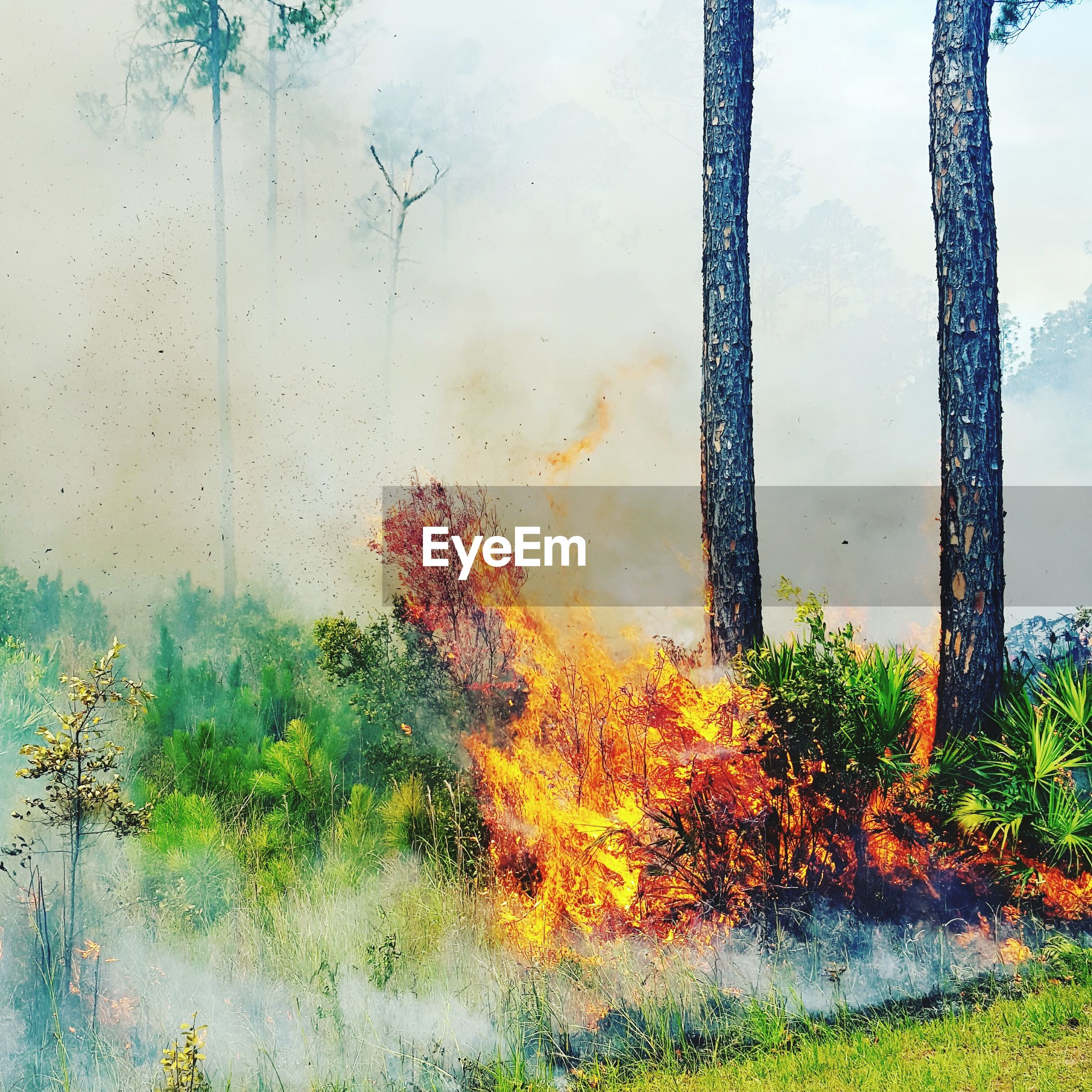 Plants burning in forest