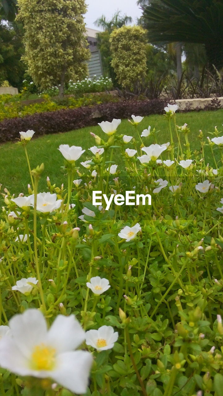 growth, flower, nature, grass, beauty in nature, plant, freshness, no people, outdoors, day, blooming, fragility, close-up