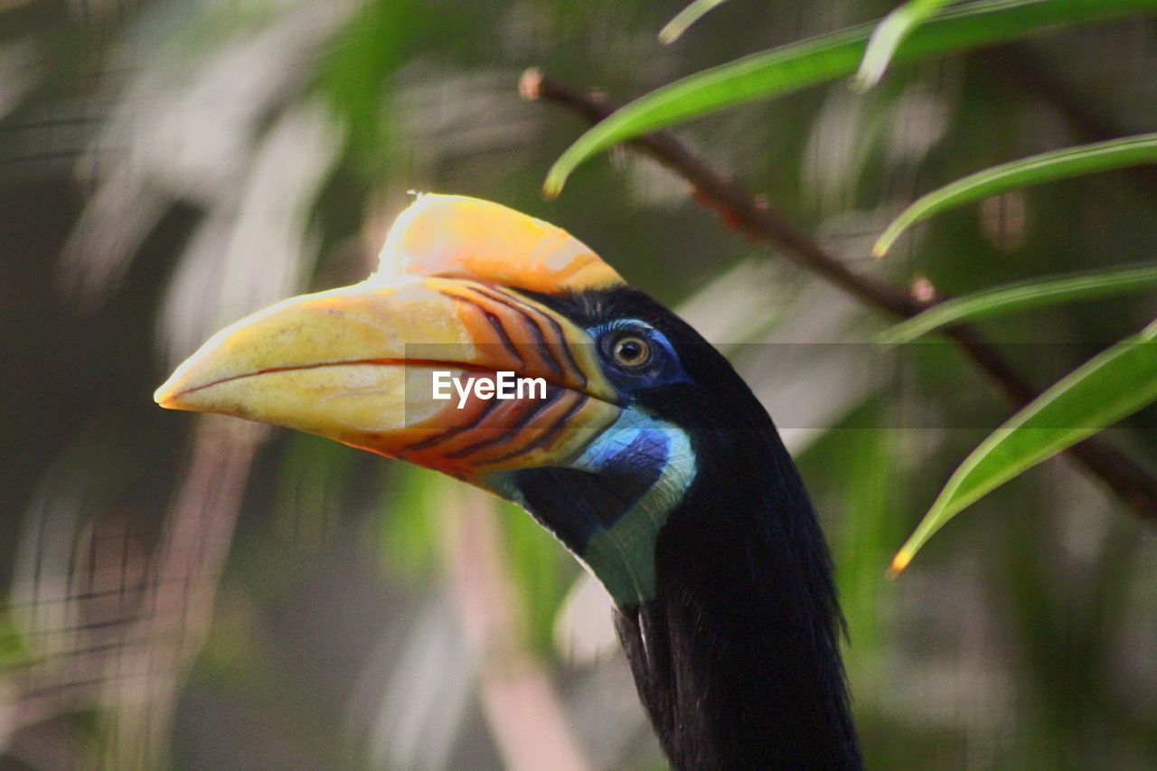 animal themes, animals in the wild, vertebrate, animal wildlife, bird, animal, one animal, focus on foreground, hornbill, beak, close-up, animal body part, no people, nature, day, side view, beauty in nature, outdoors, plant, orange color, animal head, animal neck, animal eye