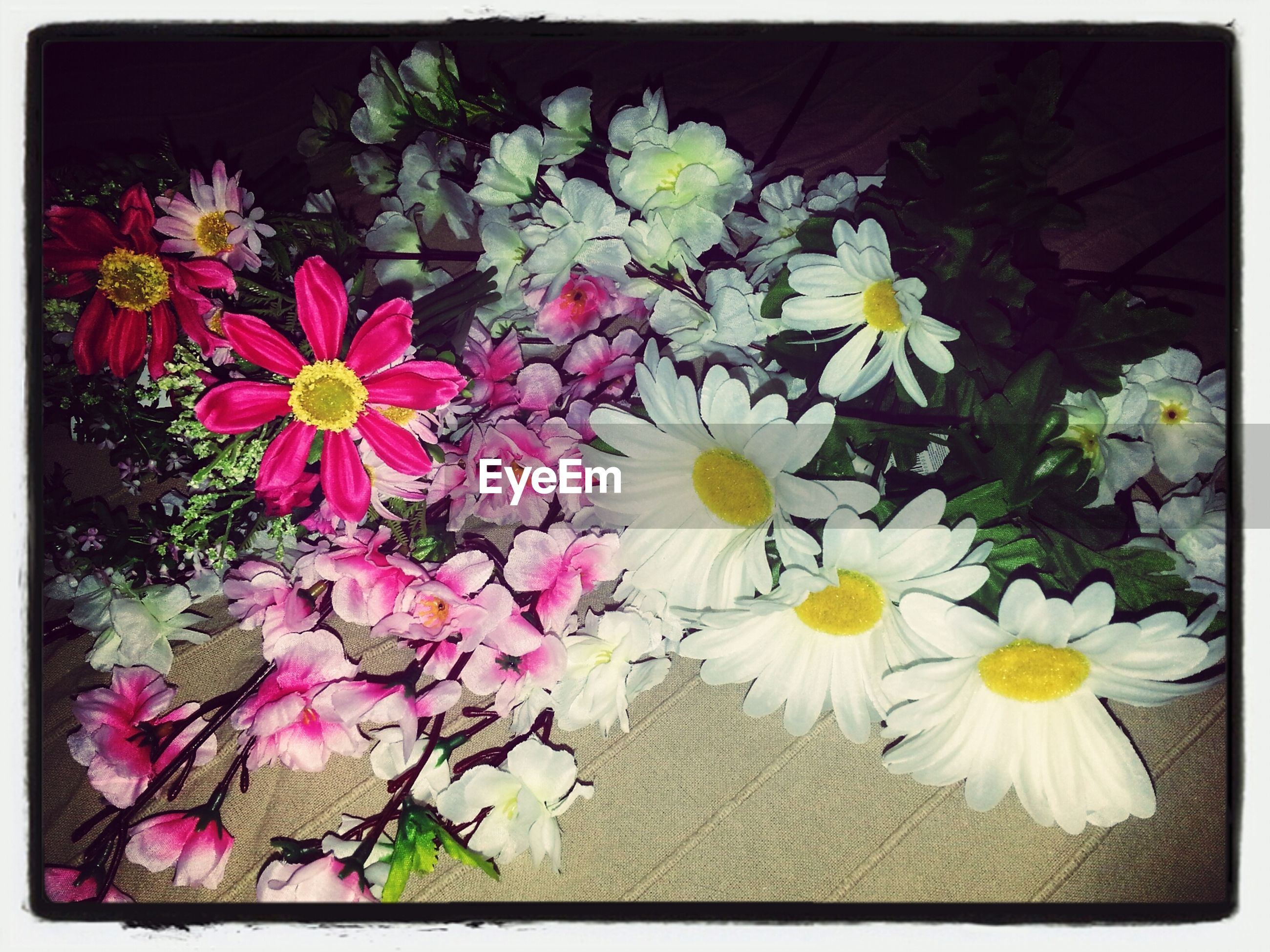 flower, transfer print, freshness, fragility, petal, beauty in nature, auto post production filter, flower head, growth, nature, blossom, high angle view, white color, indoors, blooming, in bloom, plant, bunch of flowers, no people, botany
