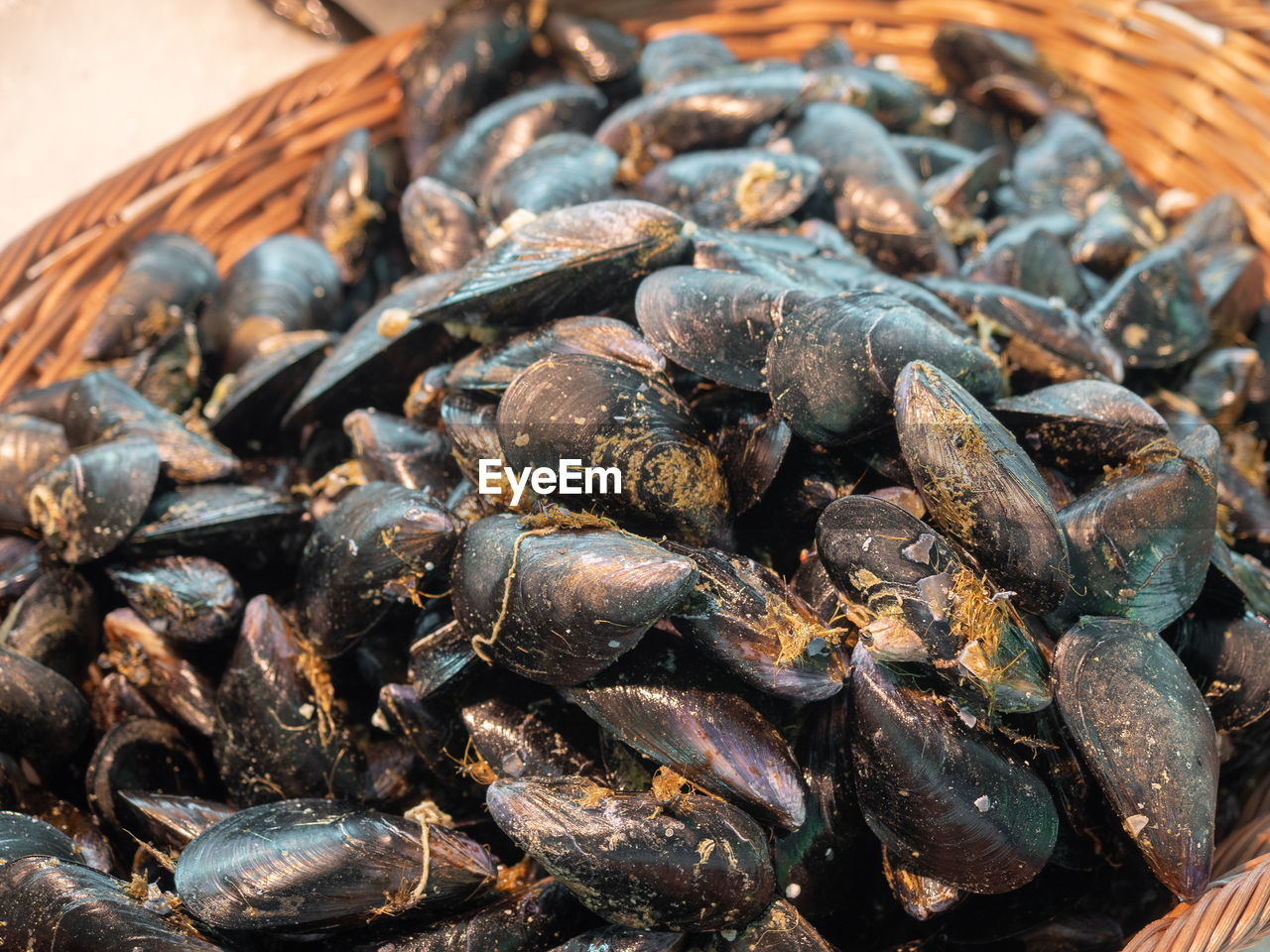 food, food and drink, seafood, freshness, wellbeing, large group of objects, still life, close-up, no people, healthy eating, high angle view, focus on foreground, animal, abundance, indoors, mussel, container, clam, animal wildlife, day