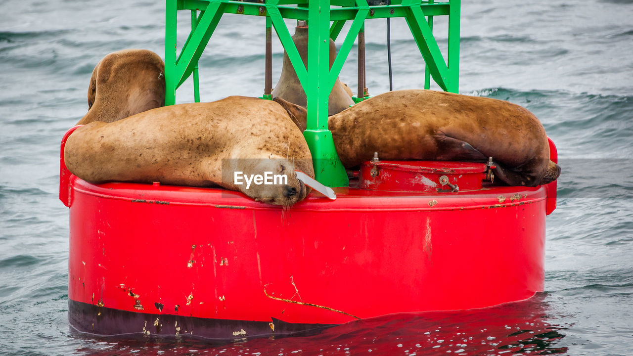 water, animal themes, animals in the wild, animal, animal wildlife, nature, day, red, sea, vertebrate, one animal, no people, container, outdoors, mammal, bird, underwater, transportation, sea lion, seal - animal