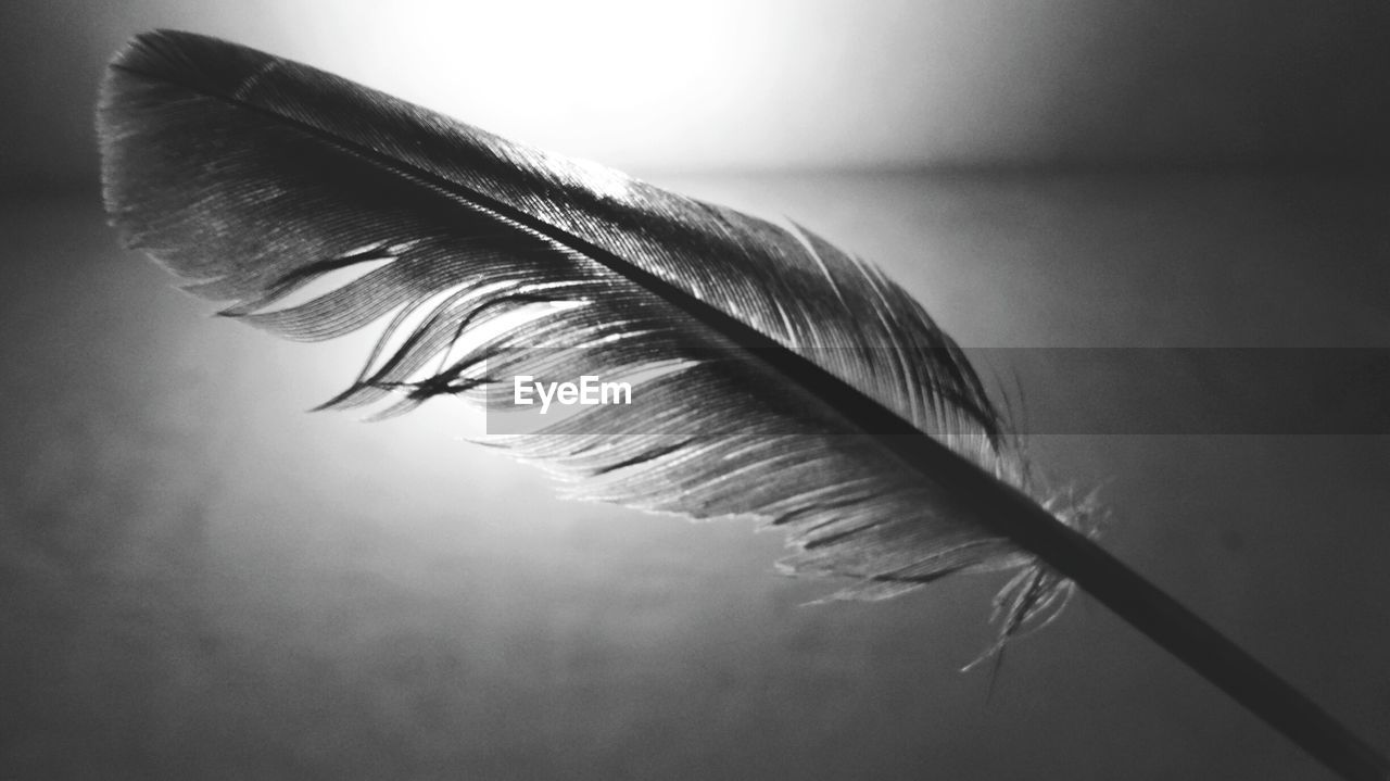 CLOSE-UP OF FEATHER AGAINST WALL