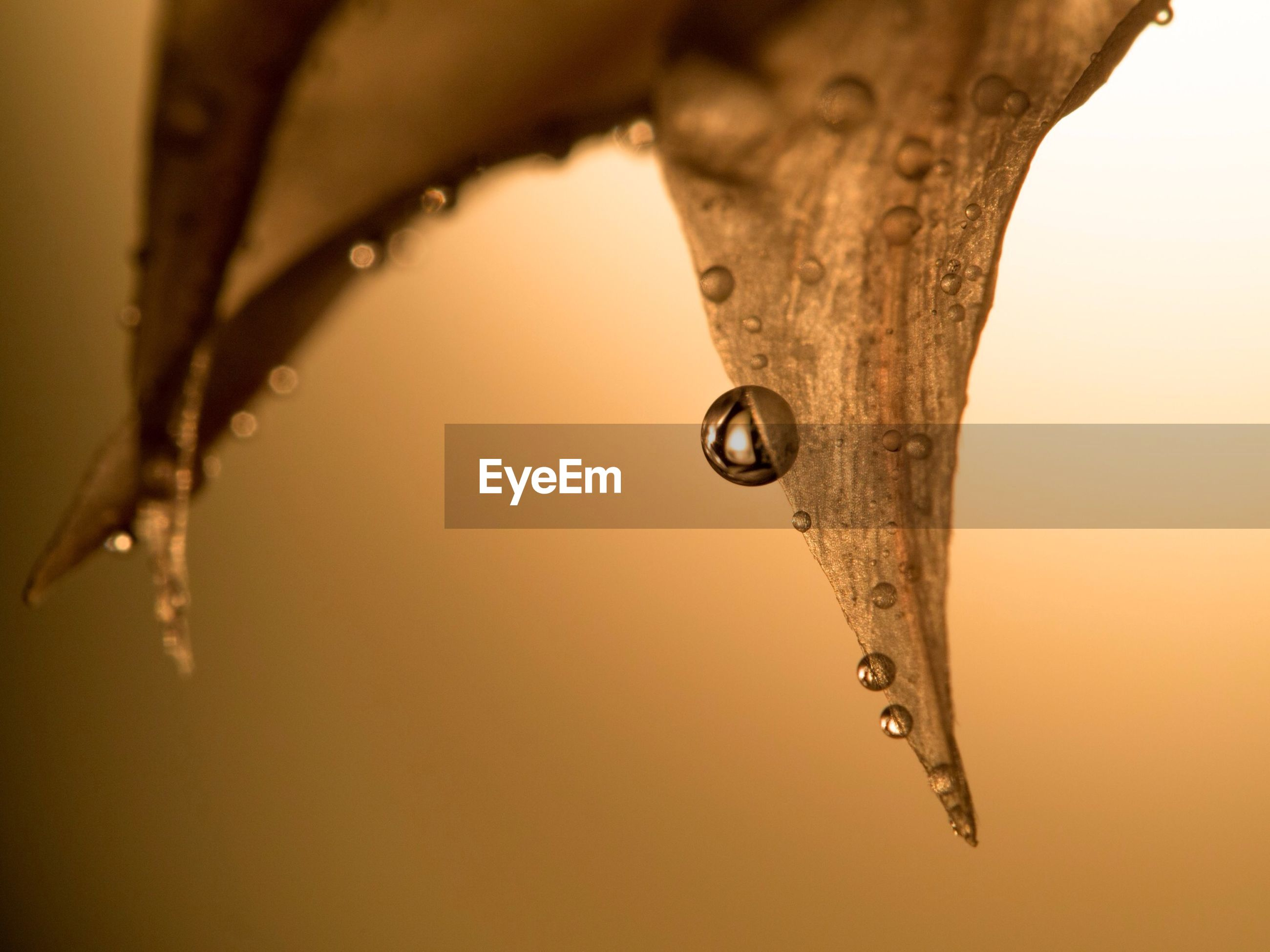 drop, water, close-up, wet, dew, focus on foreground, purity, nature, fragility, raindrop, droplet, beauty in nature, season, water drop, selective focus, rain, freshness, spider web, detail, weather