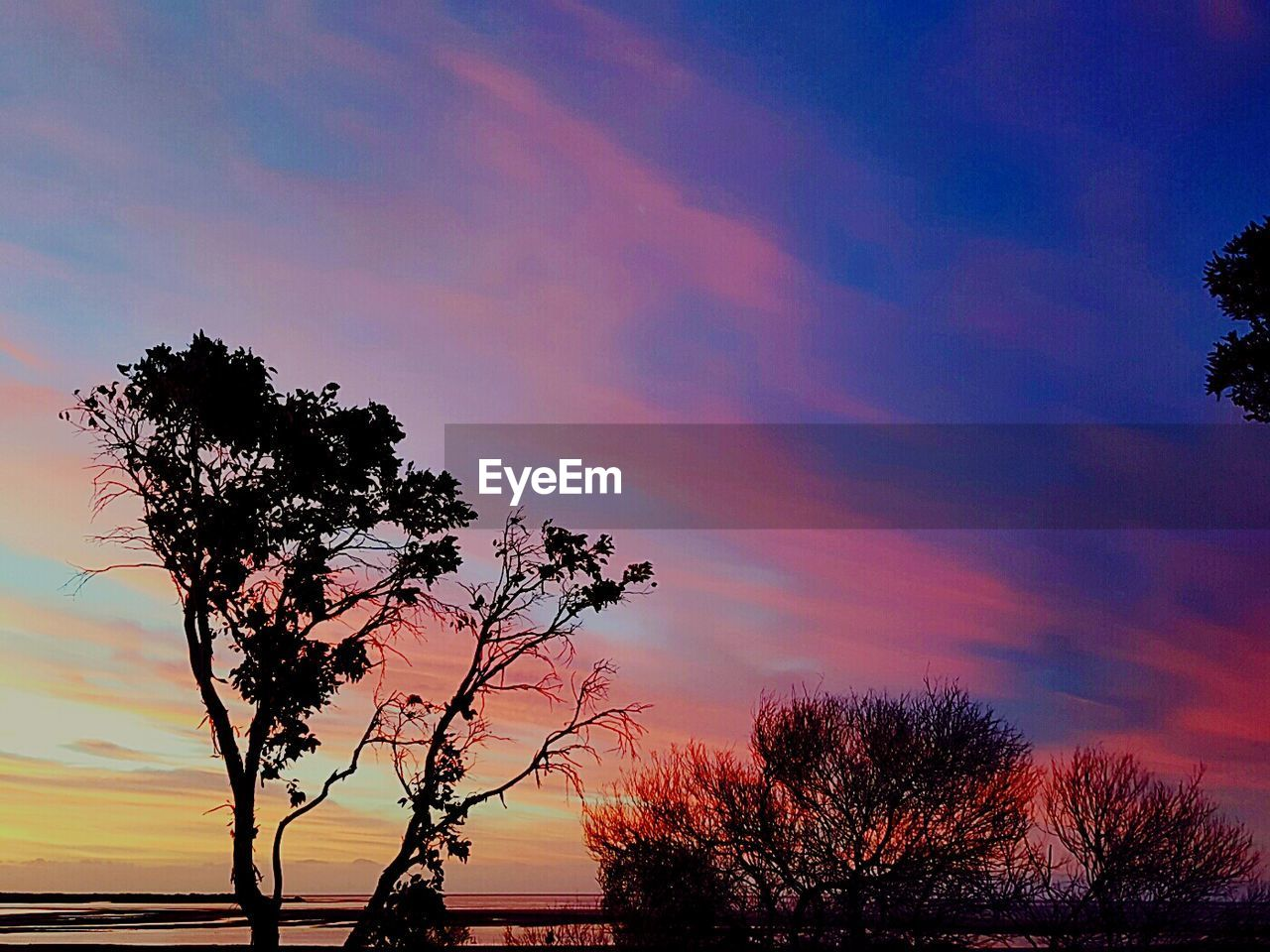 tree, silhouette, sunset, sky, nature, beauty in nature, scenics, tranquil scene, tranquility, no people, growth, outdoors, branch, landscape, lone, day