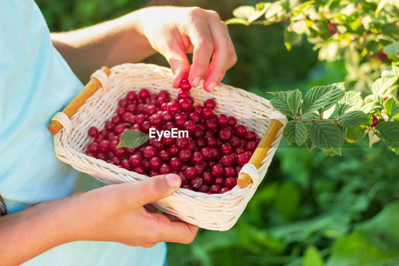 human hand, hand, one person, healthy eating, fruit, food and drink, food, human body part, real people, freshness, berry fruit, holding, wellbeing, basket, lifestyles, focus on foreground, day, container, adult, ripe, outdoors