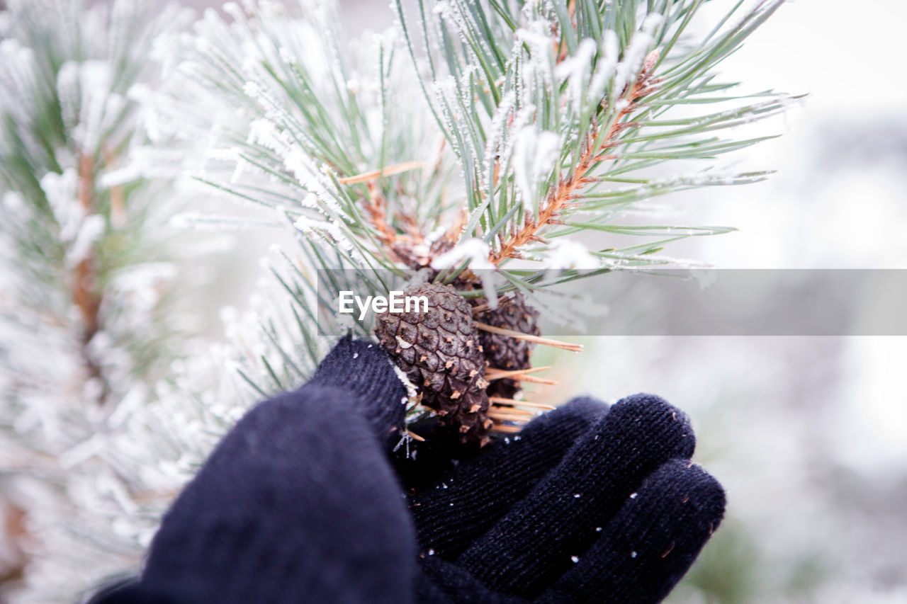 Close-up of hand on tree against sky