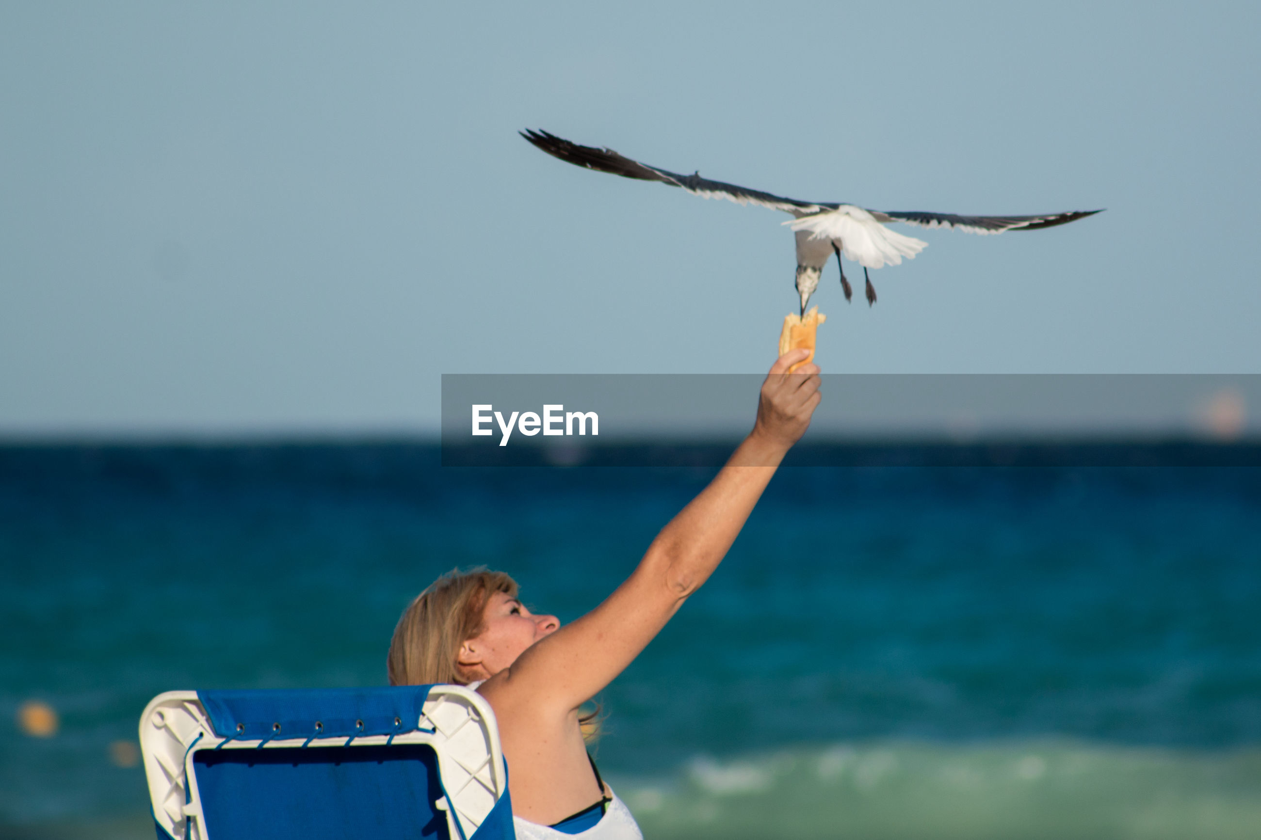 Rear view of woman feeding seagull flying over beach