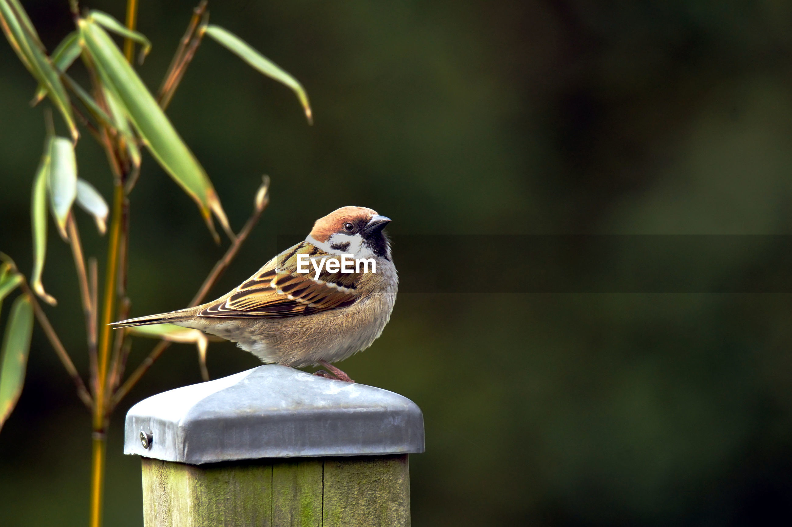 CLOSE-UP OF A BIRD PERCHING ON WOODEN POST