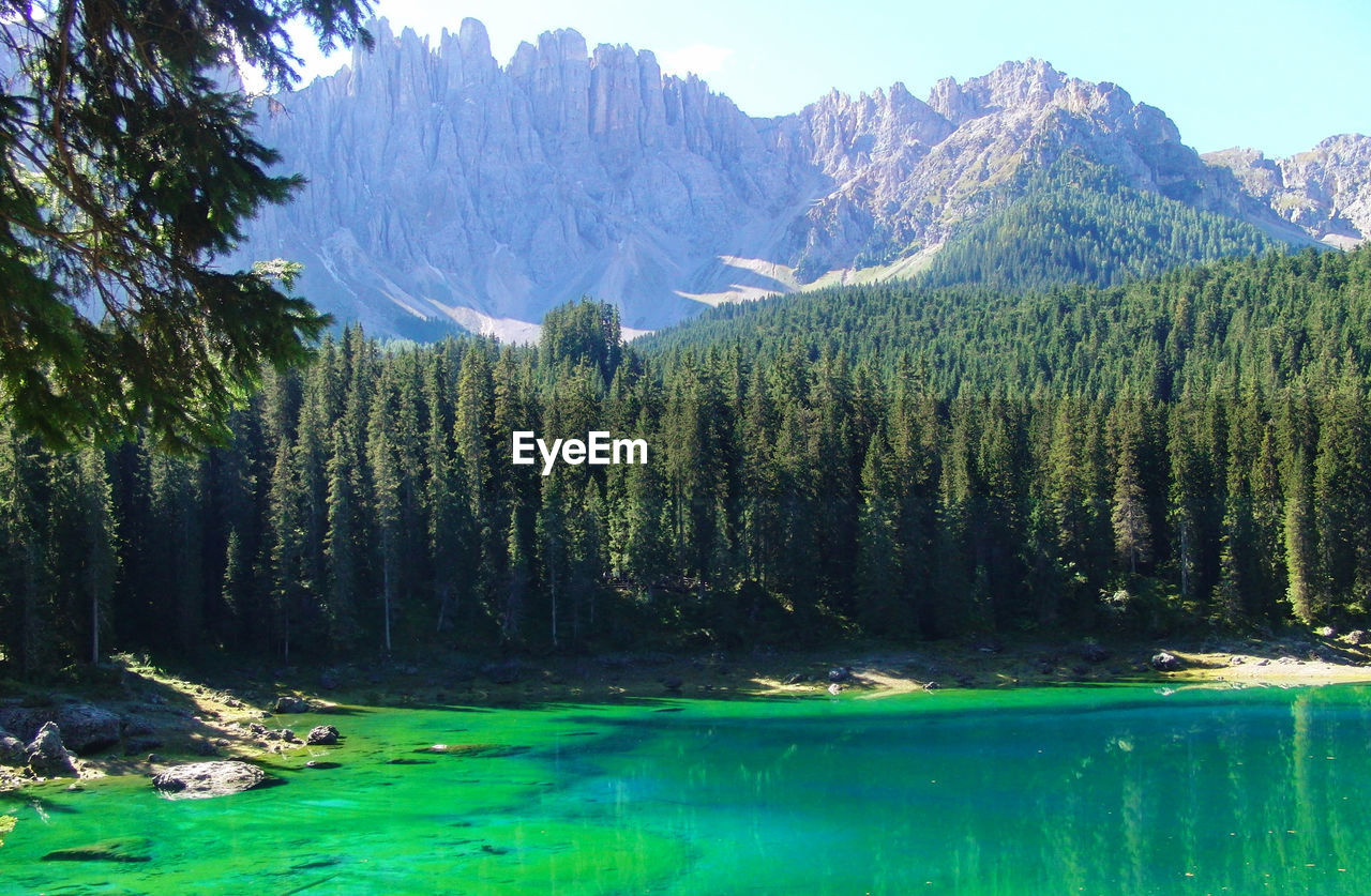 nature, tree, water, mountain, scenics, beauty in nature, forest, growth, green color, no people, landscape, outdoors, lake, sky, day, lush - description