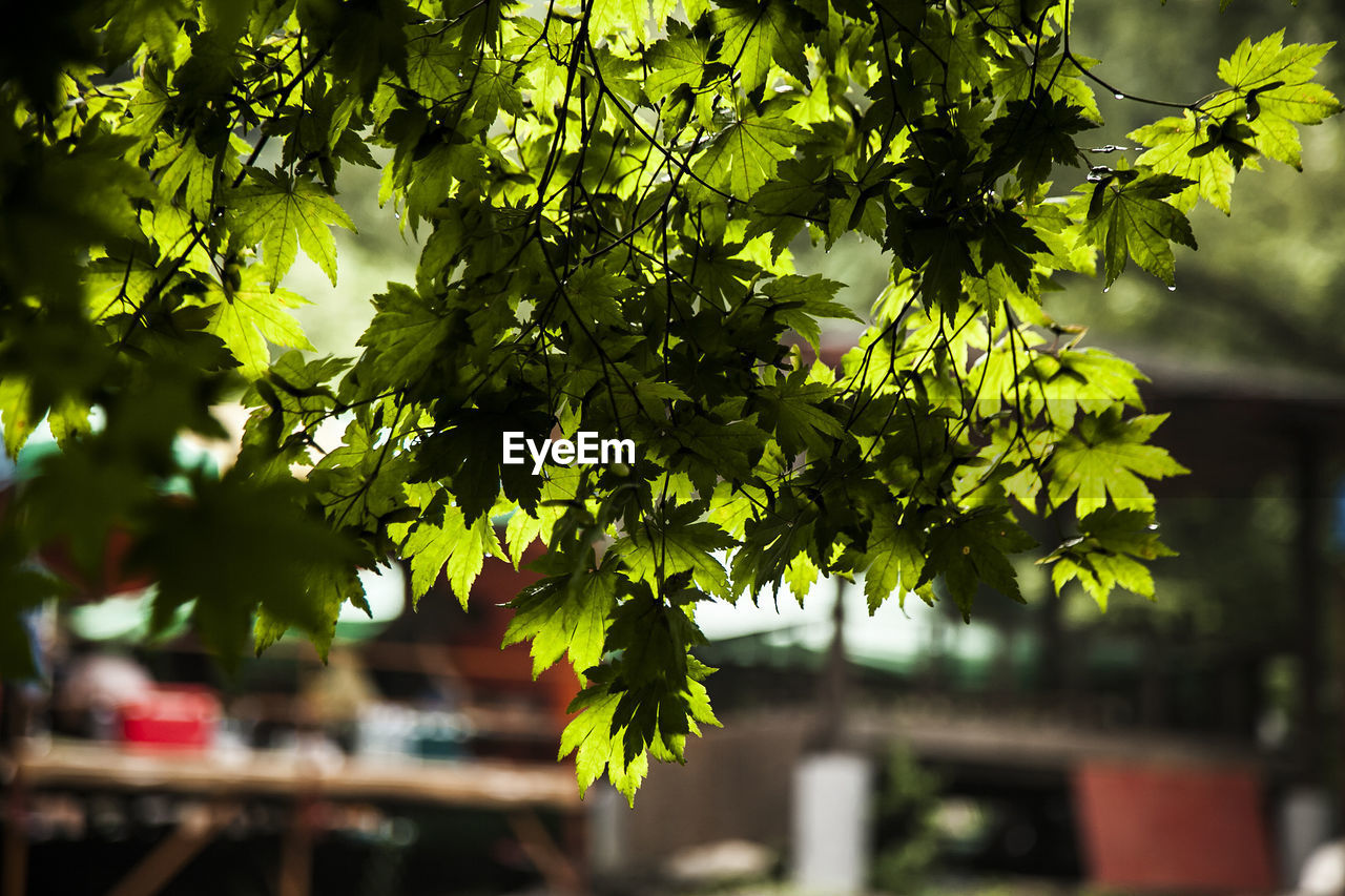 growth, tree, day, outdoors, building exterior, nature, no people, architecture, beauty in nature, close-up