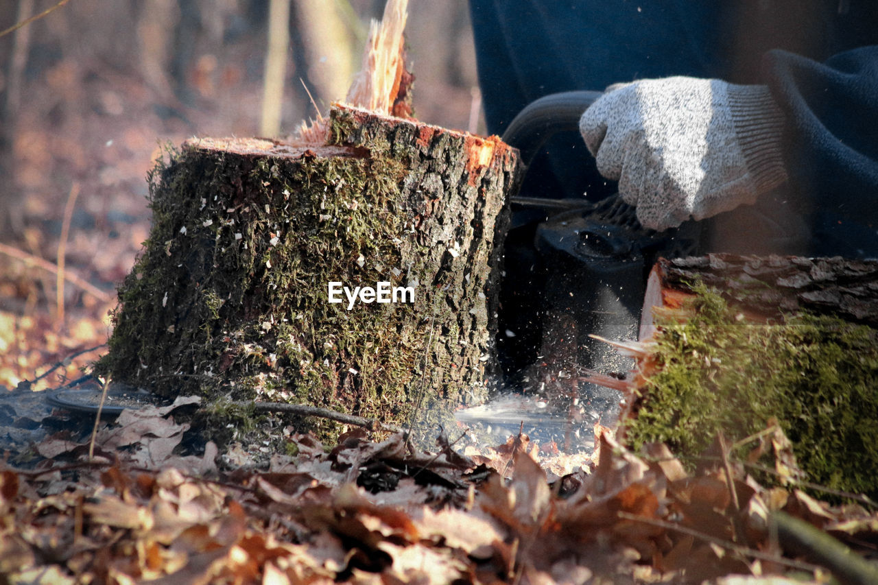 burning, heat - temperature, fire, fire - natural phenomenon, log, wood, day, flame, nature, firewood, wood - material, selective focus, tree, preparation, outdoors, motion, plant, no people, close-up, forest, preparing food, bonfire
