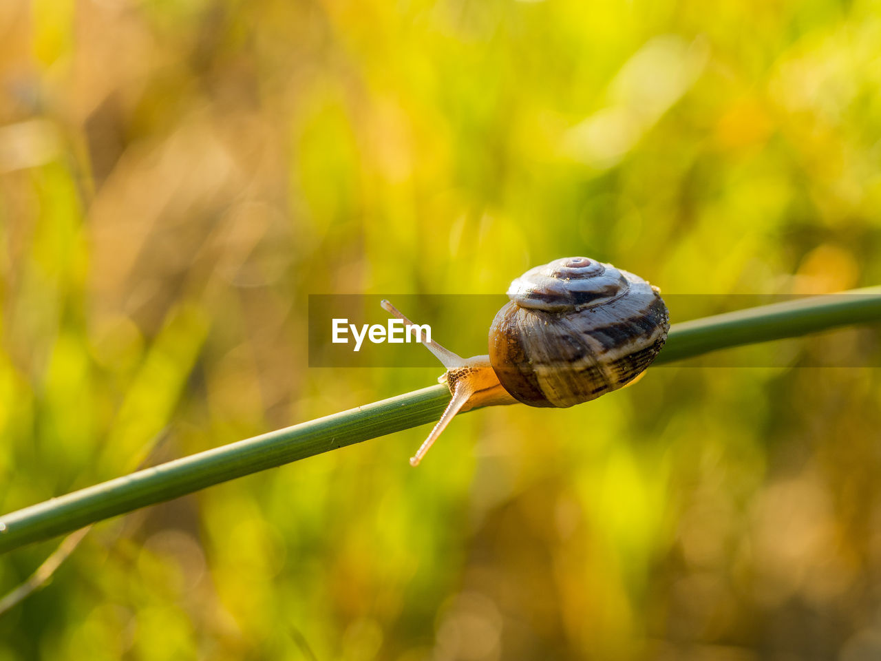 animal wildlife, invertebrate, one animal, animal, mollusk, animal themes, snail, gastropod, animals in the wild, close-up, focus on foreground, shell, animal shell, animal antenna, day, nature, plant, no people, insect, animal body part, outdoors, small