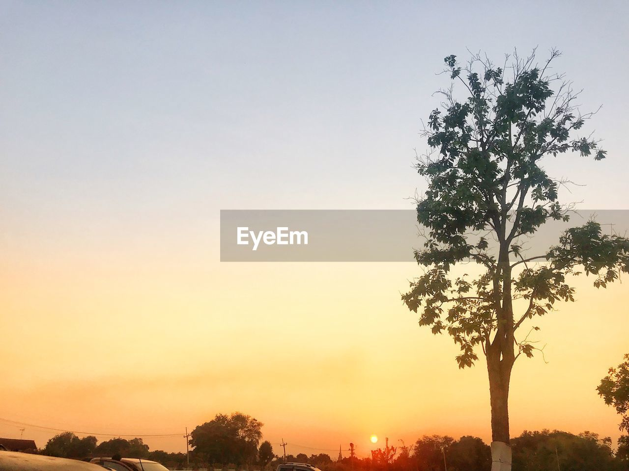 sky, tree, sunset, plant, beauty in nature, scenics - nature, nature, silhouette, tranquility, growth, no people, orange color, tranquil scene, copy space, outdoors, idyllic, clear sky, sun, low angle view