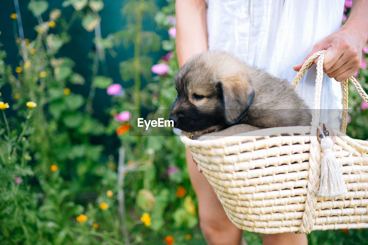one animal, pets, domestic, animal themes, domestic animals, mammal, animal, dog, canine, real people, one person, vertebrate, holding, human hand, hand, pet owner, day, flowering plant, human body part, plant, care