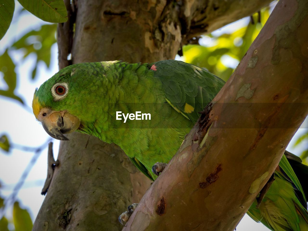 tree, animal themes, animal, parrot, vertebrate, one animal, branch, focus on foreground, animal wildlife, plant, bird, animals in the wild, perching, close-up, day, no people, nature, green color, outdoors, parakeet
