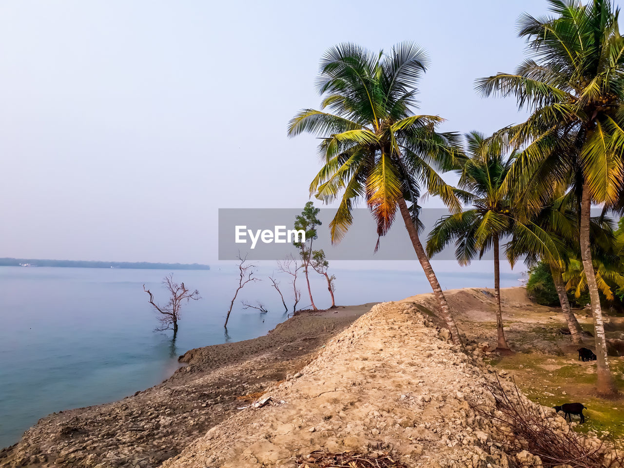 tree, sky, water, tropical climate, plant, palm tree, beauty in nature, tranquility, tranquil scene, scenics - nature, nature, sea, rock, beach, rock - object, land, solid, no people, outdoors, horizon over water, coconut palm tree