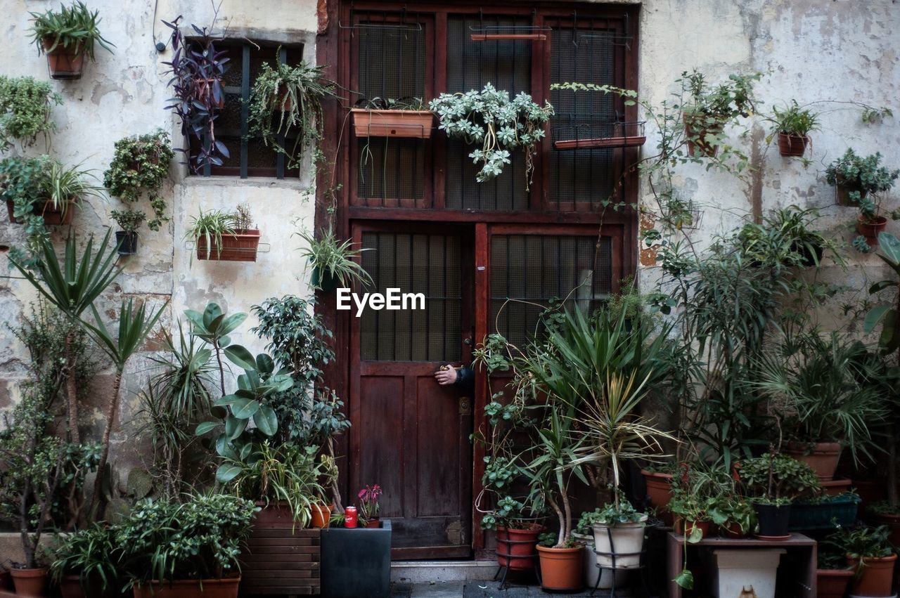 plant, potted plant, growth, built structure, building exterior, architecture, nature, building, no people, day, house, outdoors, green color, window, flowering plant, tree, flower, residential district, plant part, flower pot, houseplant