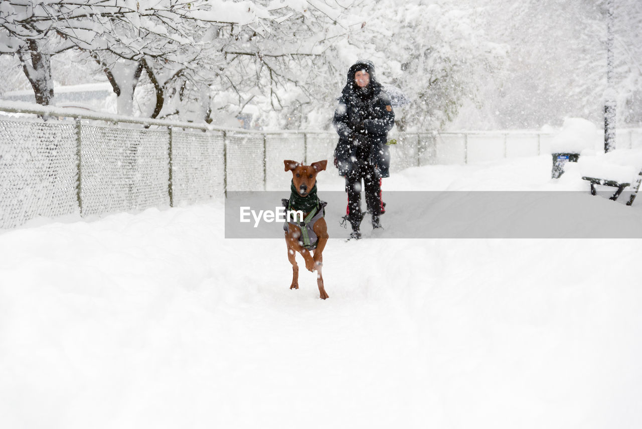 Full Length Of Woman With Dog Walking In Snow