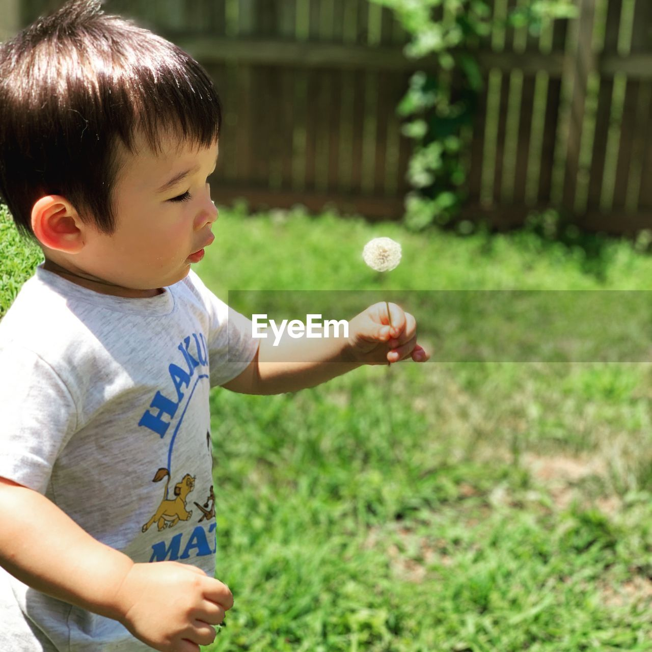 child, childhood, real people, one person, boys, casual clothing, men, males, innocence, leisure activity, cute, field, lifestyles, day, focus on foreground, standing, grass, plant