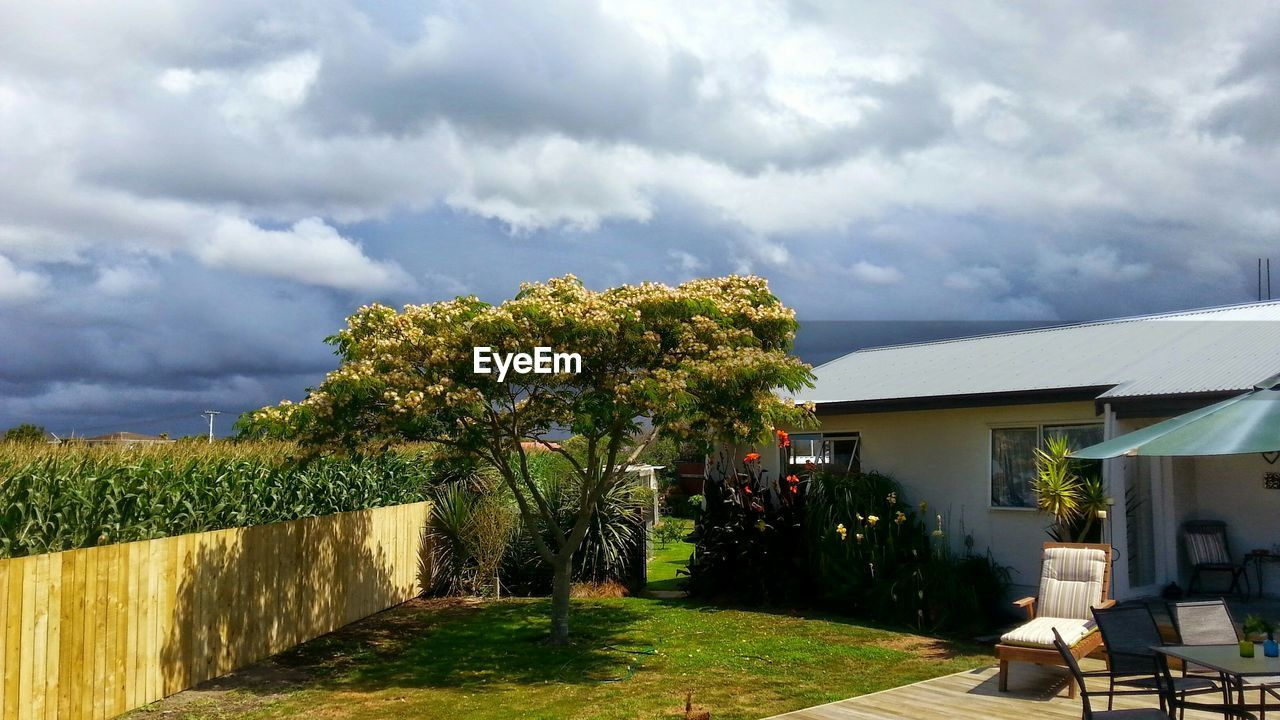 Tree in back yard