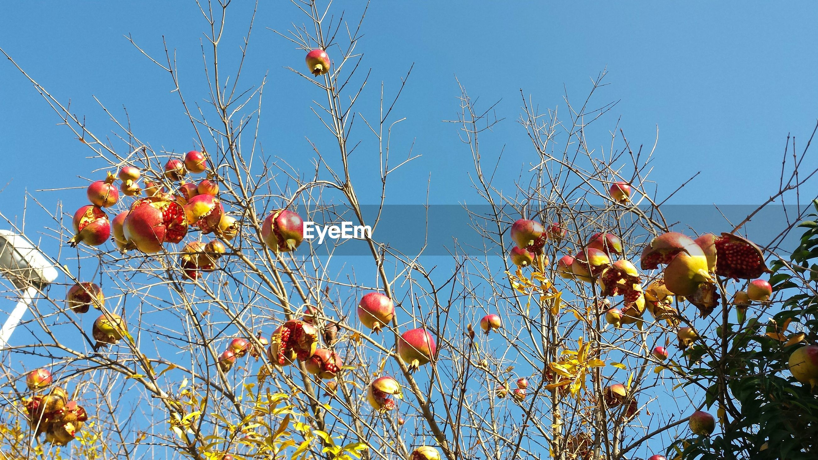low angle view, clear sky, blue, growth, sky, flower, nature, freshness, tree, plant, hanging, branch, fragility, red, beauty in nature, outdoors, no people, day, power line, stem