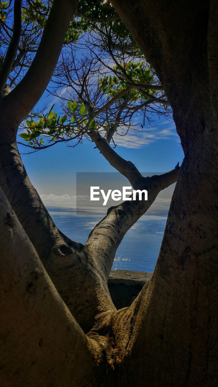 tree, plant, sky, water, nature, tree trunk, tranquility, beauty in nature, scenics - nature, trunk, tranquil scene, day, land, no people, outdoors, sea, beach, branch, idyllic