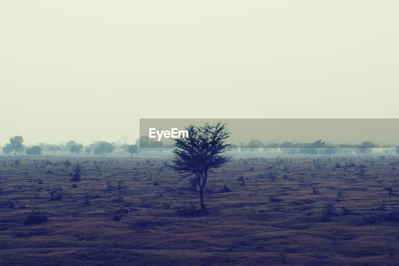 tree, sky, environment, landscape, tranquil scene, plant, scenics - nature, tranquility, copy space, land, field, nature, beauty in nature, non-urban scene, no people, day, fog, growth, outdoors, arid climate