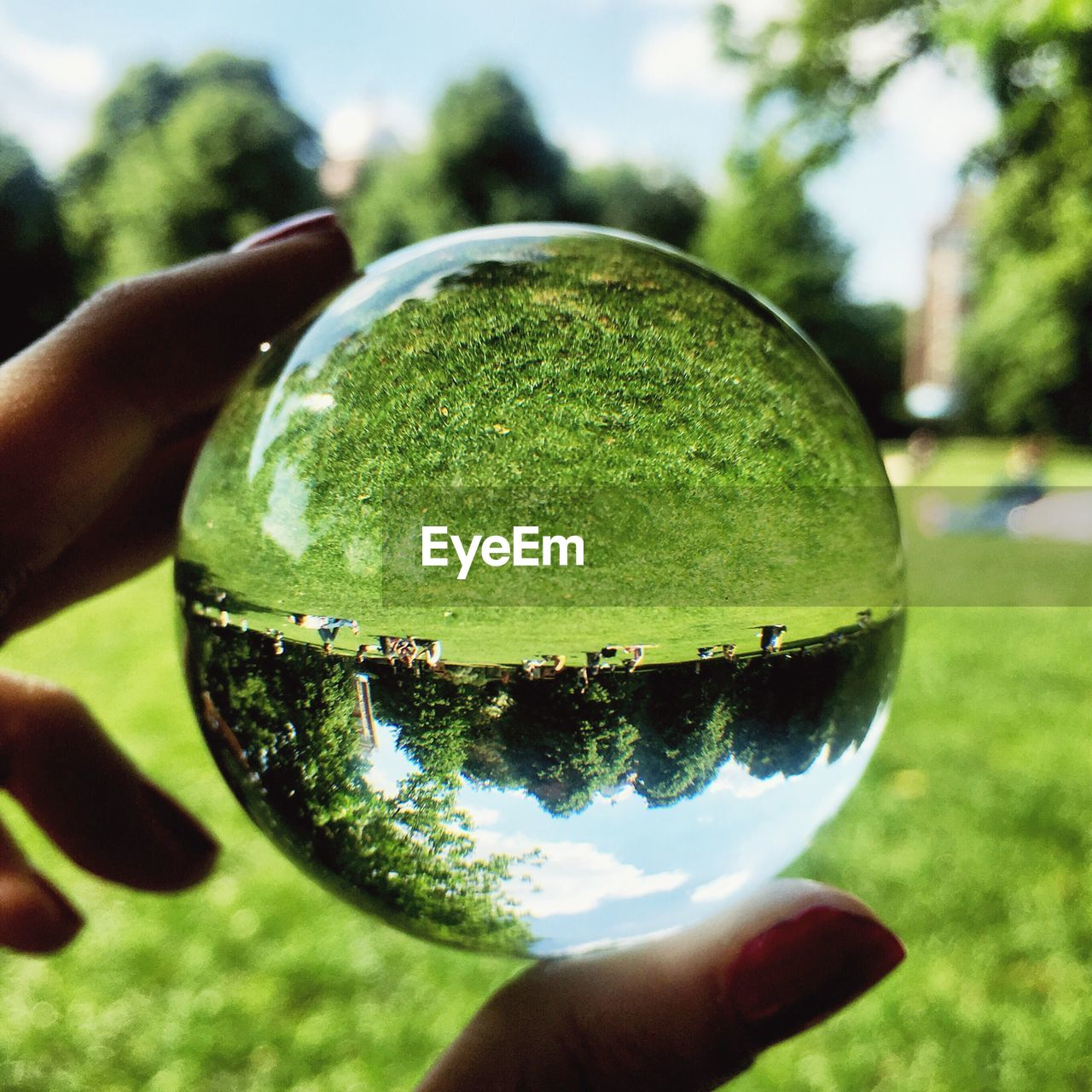 Cropped hand of woman holding crystal ball with reflection at park