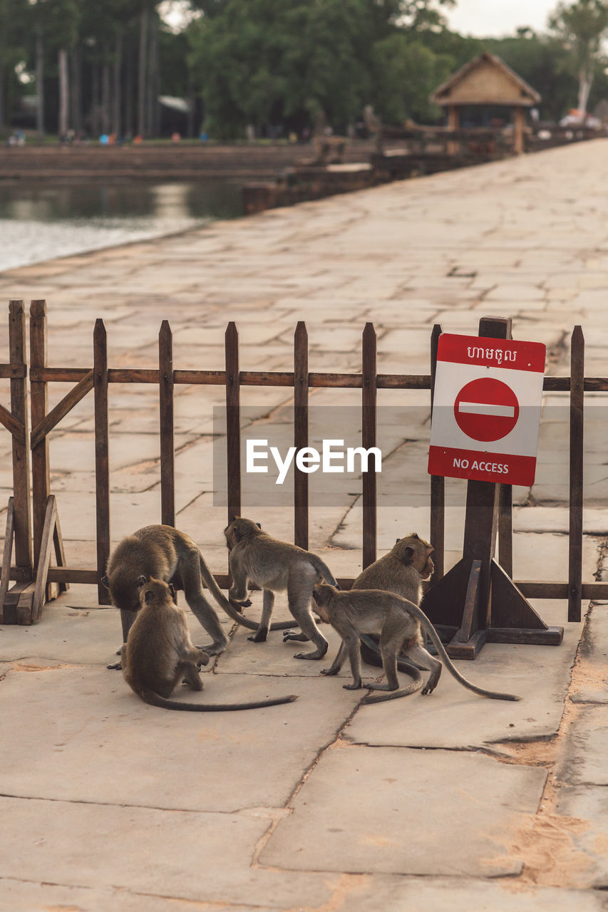 communication, group of animals, animal, animal themes, day, no people, sign, nature, outdoors, vertebrate, relaxation, mammal, water, animal wildlife, text, medium group of animals, railing, safety, focus on foreground