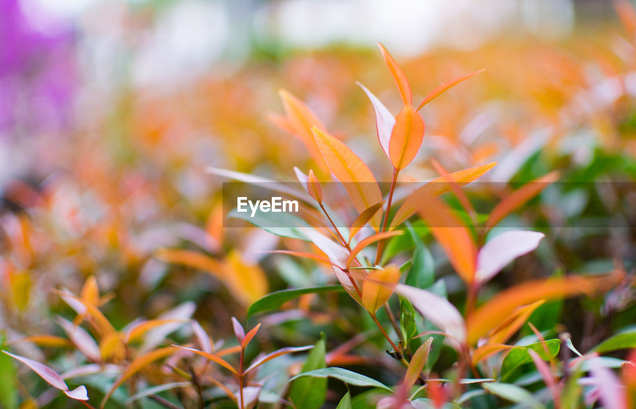 growth, beauty in nature, plant, close-up, focus on foreground, selective focus, freshness, no people, vulnerability, fragility, orange color, nature, plant part, petal, day, flowering plant, flower, leaf, field, outdoors, flower head