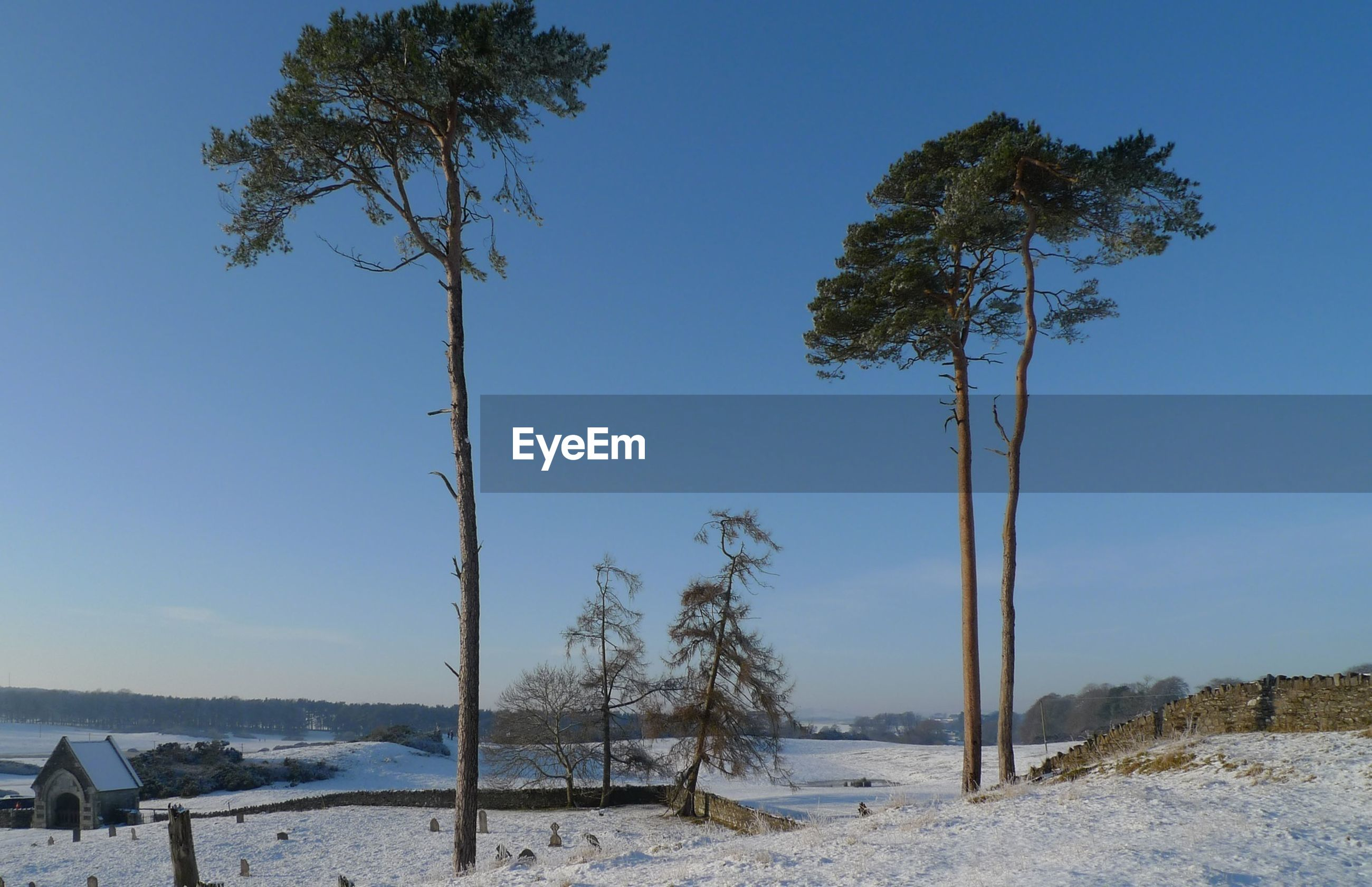 tree, clear sky, tranquility, tranquil scene, nature, beauty in nature, tree trunk, scenics, blue, snow, landscape, winter, bare tree, cold temperature, beach, branch, sand, non-urban scene, growth, field