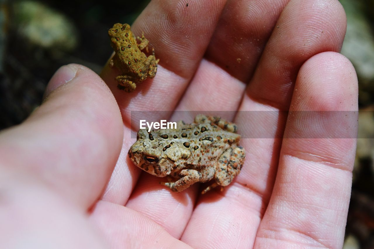 Close-Up Of Frog On Hand
