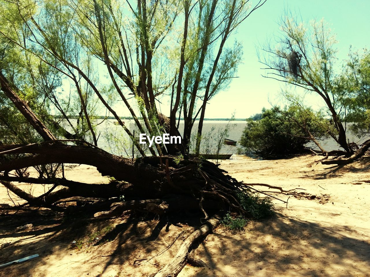 tree, sand, nature, day, sunlight, tranquility, branch, no people, tree trunk, outdoors, tranquil scene, beauty in nature, growth, bare tree, shadow, dead tree, scenics, sky, arid climate