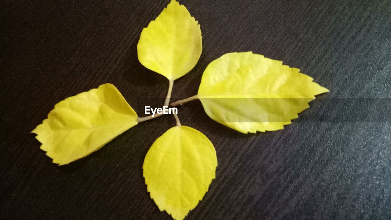 yellow, leaf, high angle view, no people, close-up, indoors, freshness, day