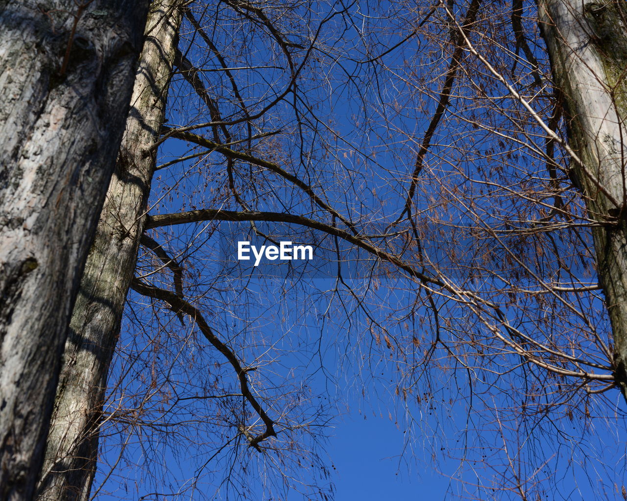 tree, branch, bare tree, low angle view, nature, day, tree trunk, blue, no people, beauty in nature, clear sky, outdoors, growth, sky, flower, close-up, freshness