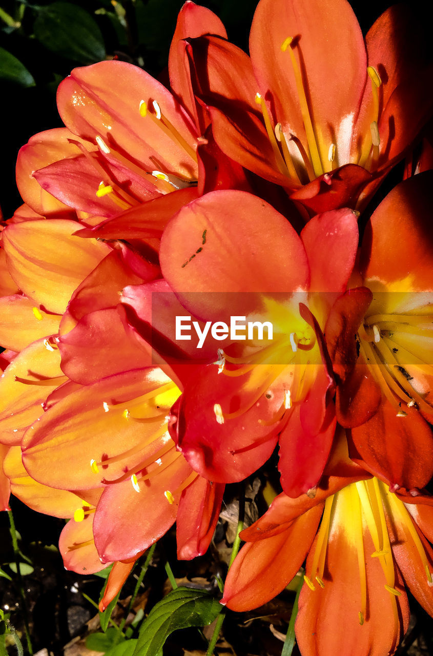 flower, petal, growth, beauty in nature, fragility, freshness, flower head, nature, plant, outdoors, no people, day, stamen, blooming, close-up, day lily