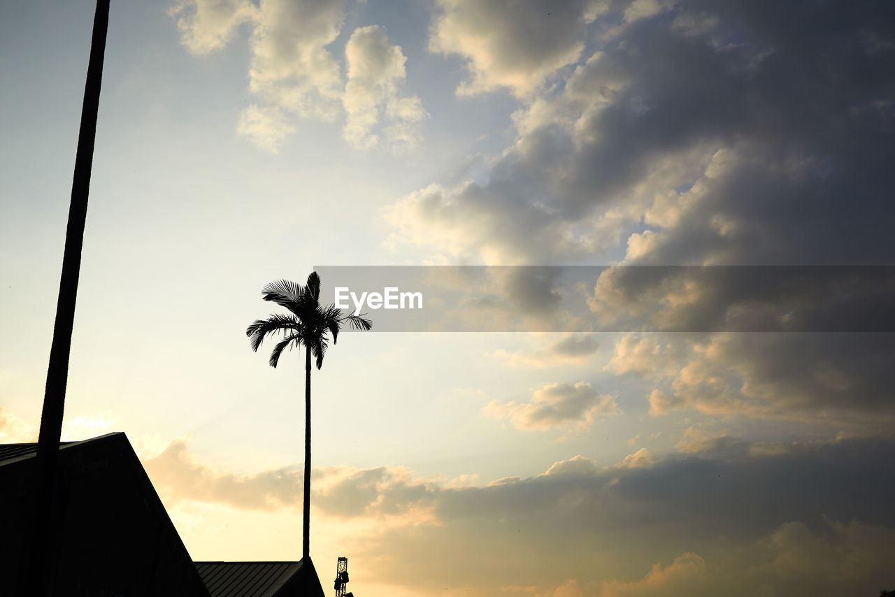 cloud - sky, sky, beauty in nature, sunset, silhouette, nature, low angle view, no people, palm tree, scenics - nature, tropical climate, outdoors, plant, architecture, tranquility, tranquil scene, built structure, growth, overcast, flower
