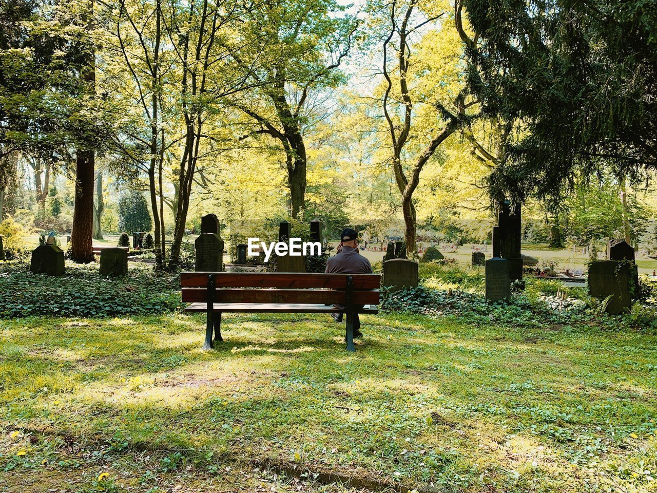 tree, plant, bench, seat, sitting, real people, day, nature, relaxation, leisure activity, men, park, people, outdoors, growth, grass, adult, lifestyles, group of people, rear view, park bench