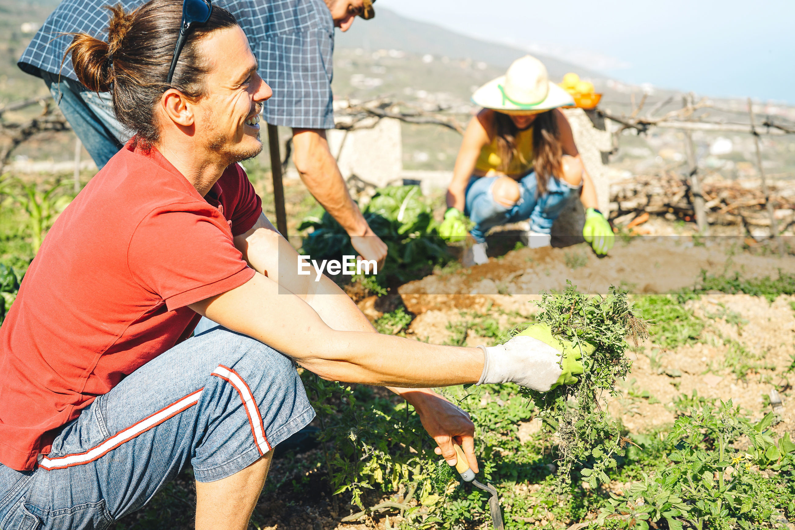 Friends gardening vegetables on farm during sunny day