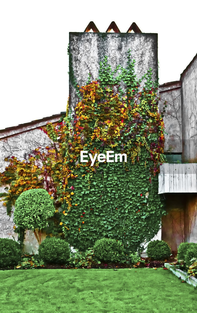 plant, built structure, architecture, building exterior, nature, growth, green color, no people, building, ivy, day, house, outdoors, wall - building feature, sky, flowering plant, flower, low angle view, grass, creeper plant, hedge