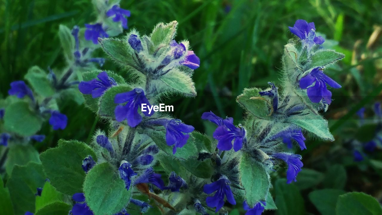 growth, flower, plant, nature, beauty in nature, purple, fragility, green color, petal, no people, freshness, leaf, outdoors, flower head, blooming, iris - plant, day, close-up