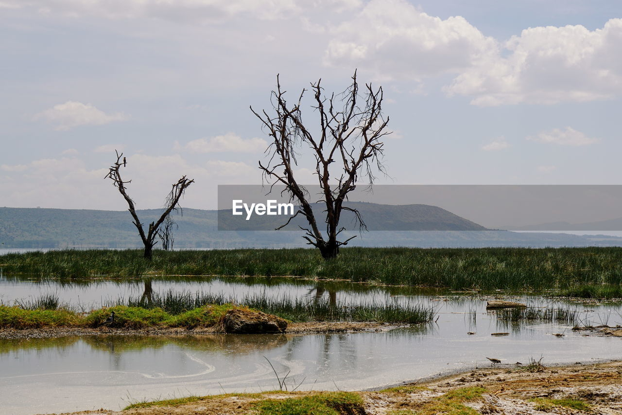 water, sky, tranquil scene, tranquility, scenics - nature, lake, tree, beauty in nature, bare tree, cloud - sky, non-urban scene, plant, nature, no people, reflection, landscape, environment, day, remote, outdoors, dead plant