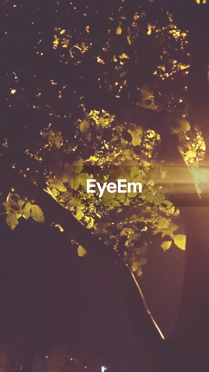 nature, tree, beauty in nature, growth, no people, night, leaf, outdoors, freshness, branch, flower, close-up