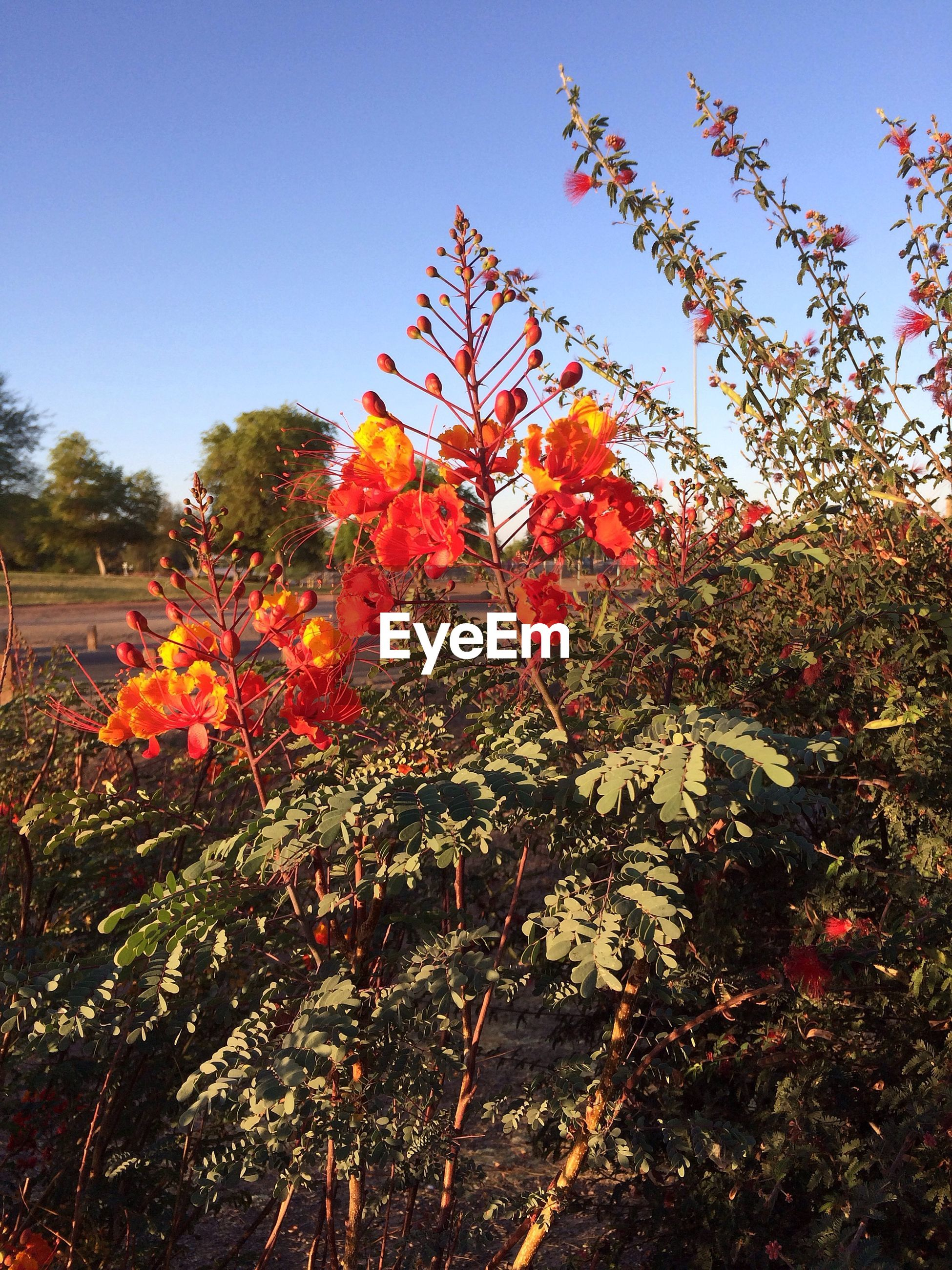 plant, growth, flower, flowering plant, beauty in nature, sky, freshness, vulnerability, fragility, nature, no people, day, orange color, tree, low angle view, outdoors, close-up, sunlight, tranquility, botany, flower head