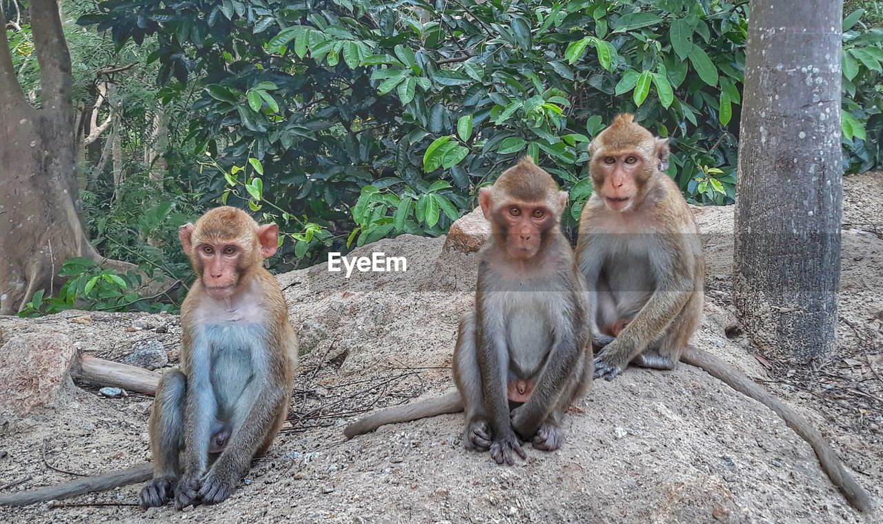 monkey, group of animals, animal wildlife, animal themes, animals in the wild, primate, animal, sitting, mammal, vertebrate, young animal, day, nature, tree, togetherness, no people, animal family, plant, solid, outdoors