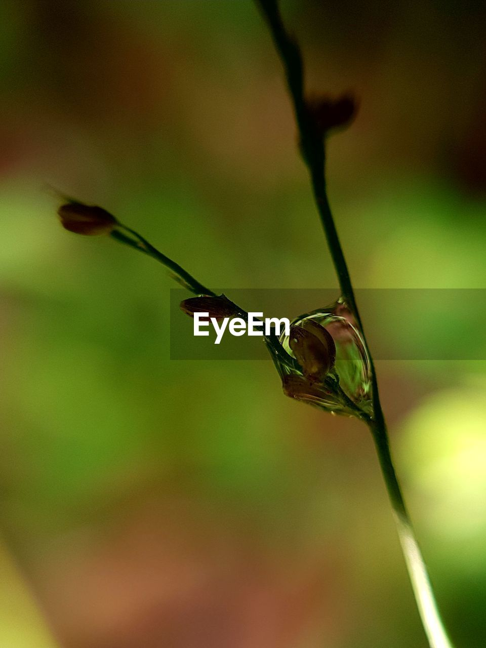 plant, focus on foreground, close-up, no people, nature, growth, beauty in nature, plant stem, twig, animal wildlife, day, outdoors, selective focus, animals in the wild, animal themes, one animal, animal, flower, freshness, fragility