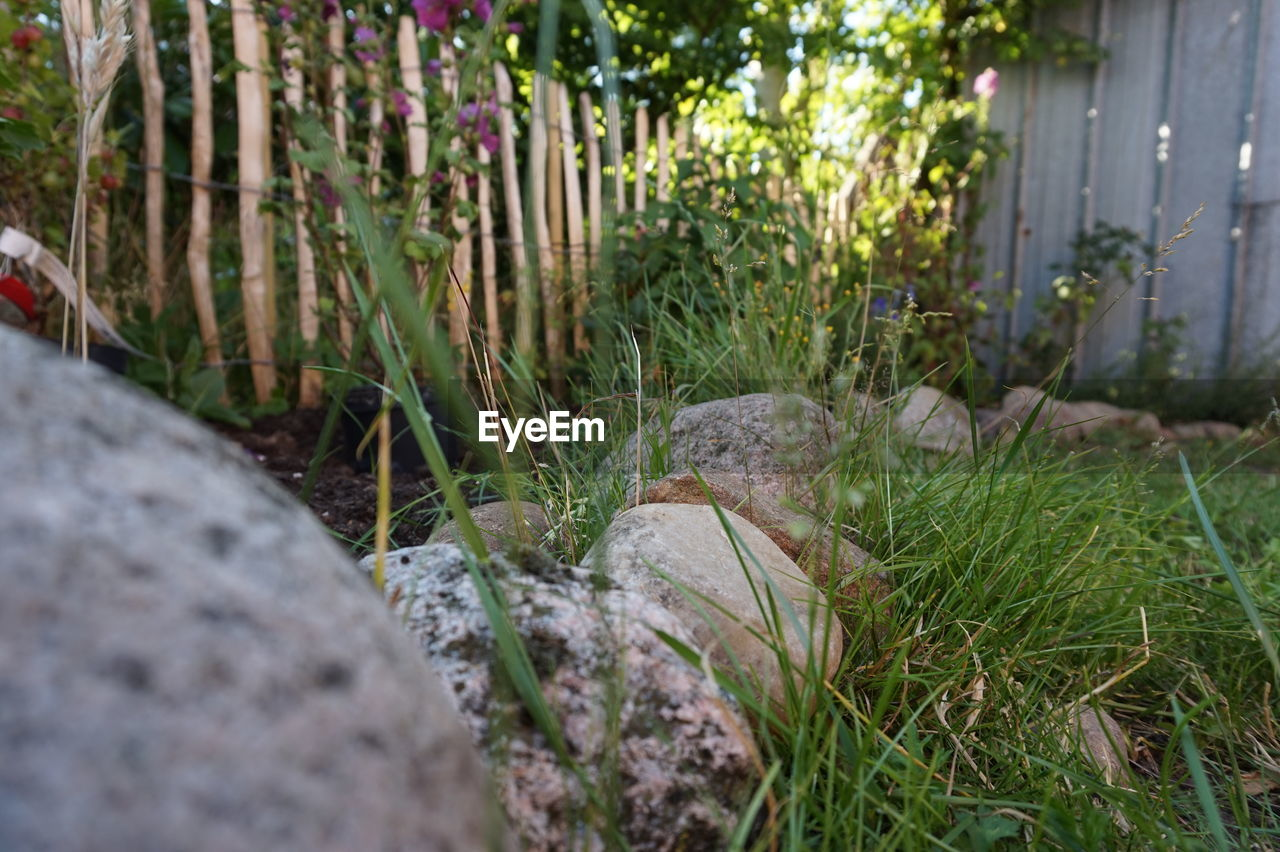 grass, growth, nature, no people, day, outdoors, plant, focus on foreground, beauty in nature, close-up, fragility, freshness