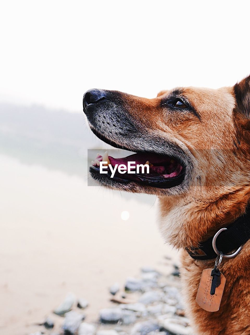 CLOSE-UP OF DOG LOOKING AWAY ON LAND