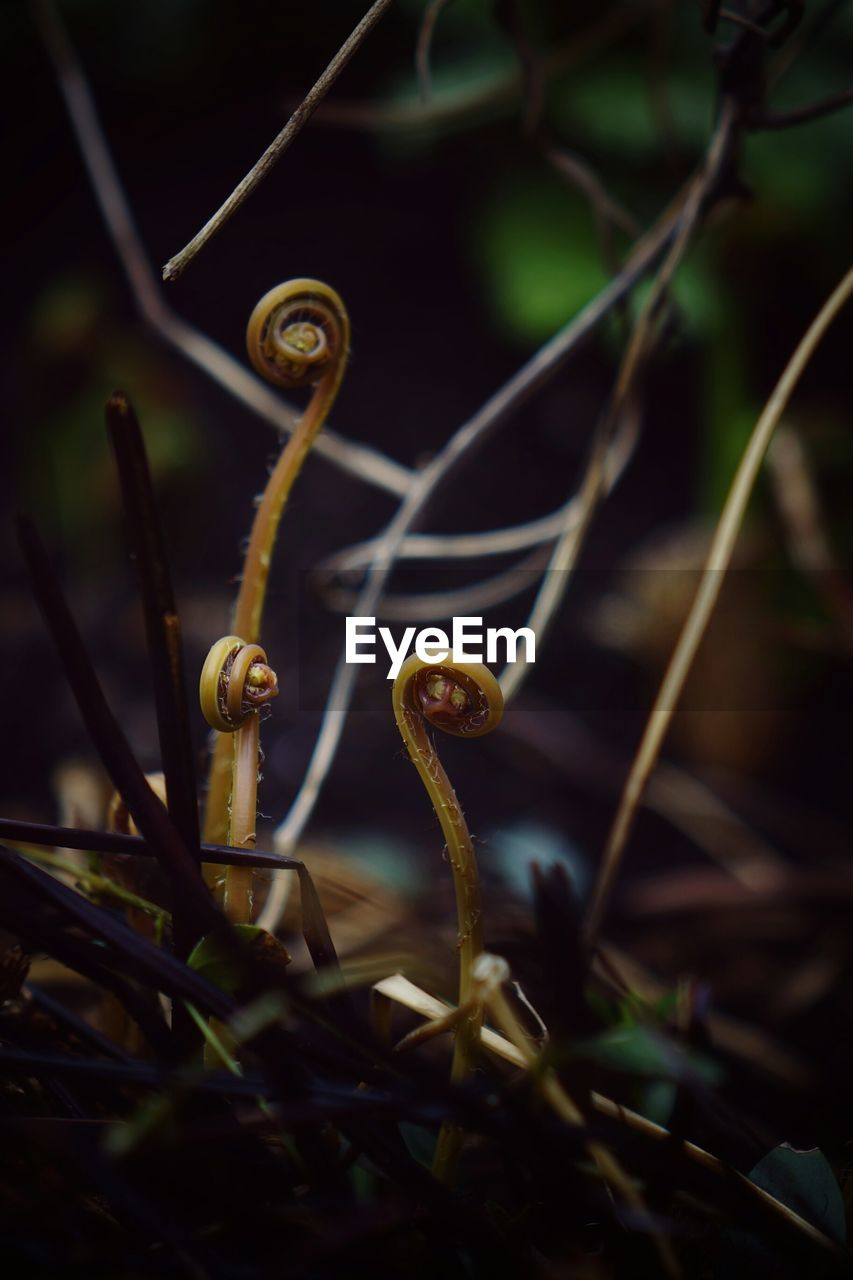 plant, nature, growth, close-up, one animal, tendril, animal themes, twig, animals in the wild, no people, outdoors, beauty in nature, day, selective focus, focus on foreground, green color, animal wildlife, fragility